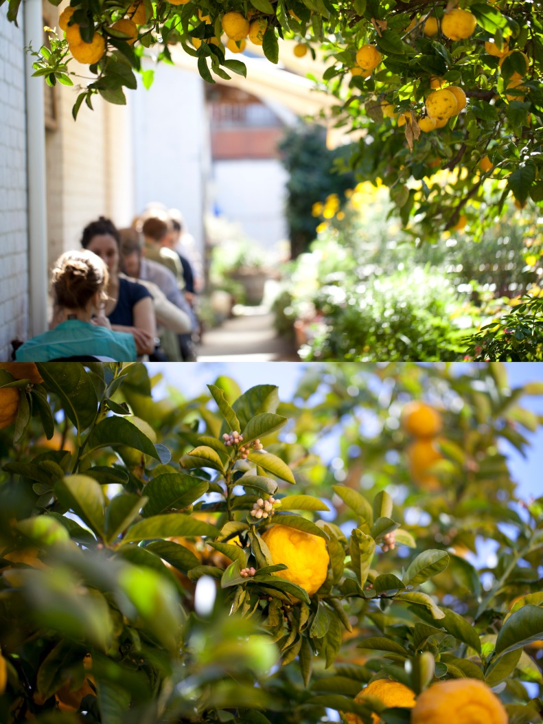 imagine a lazy brunch under a burgeoning lemon tree & speckled sunlight