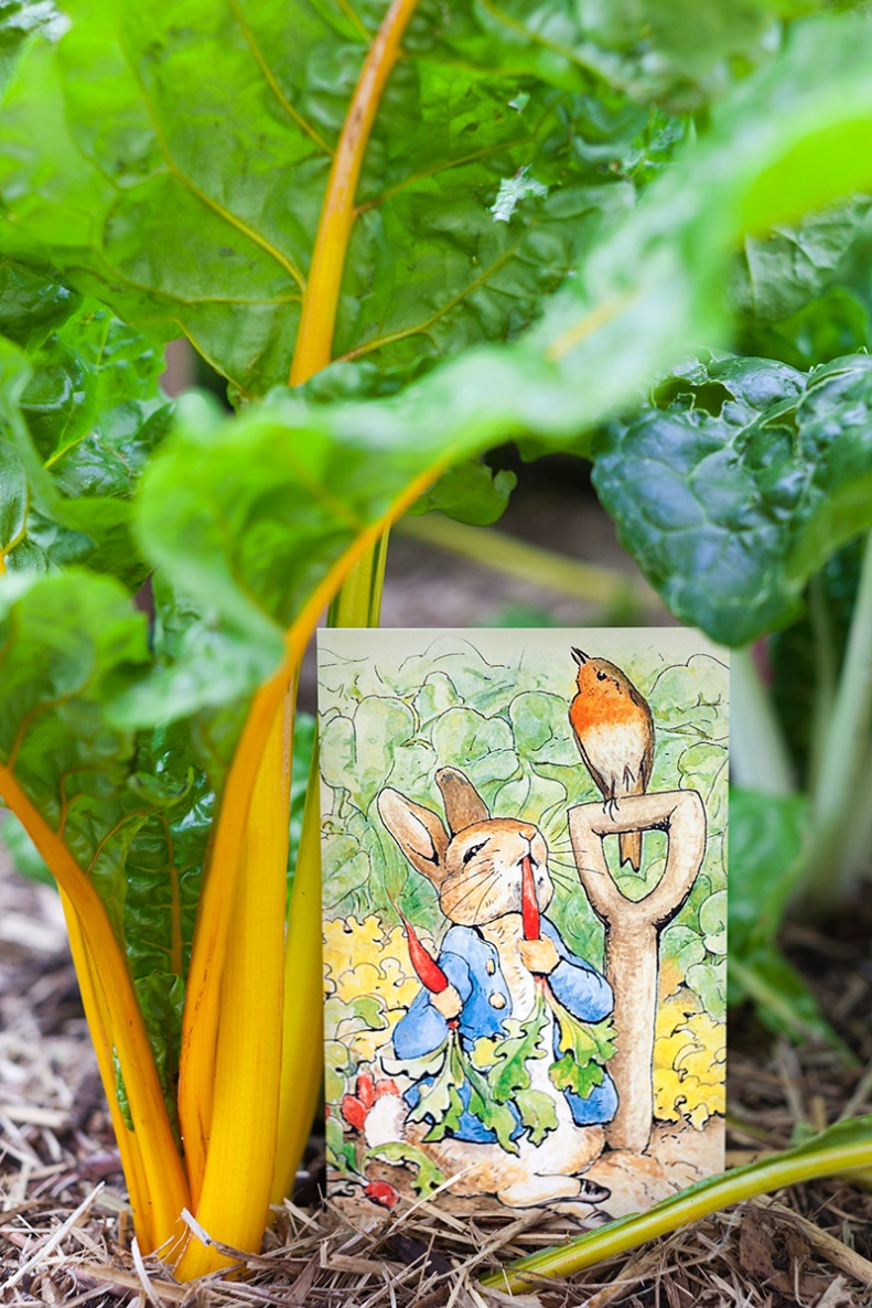 Flopsy, Mopsy, & Cotton-tail, who were good little bunnies, went down the lane to gather blackberries; but Peter, who was very naughty, ran straight away to Mr. McGregor's garden, & squeezed under the gate! first he ate some lettuces & some french beans; & then he ate some radishes